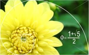 斐波那契数列的规律